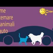 Animali in auto: come sistemarli - Consigli di Chiarezza.it